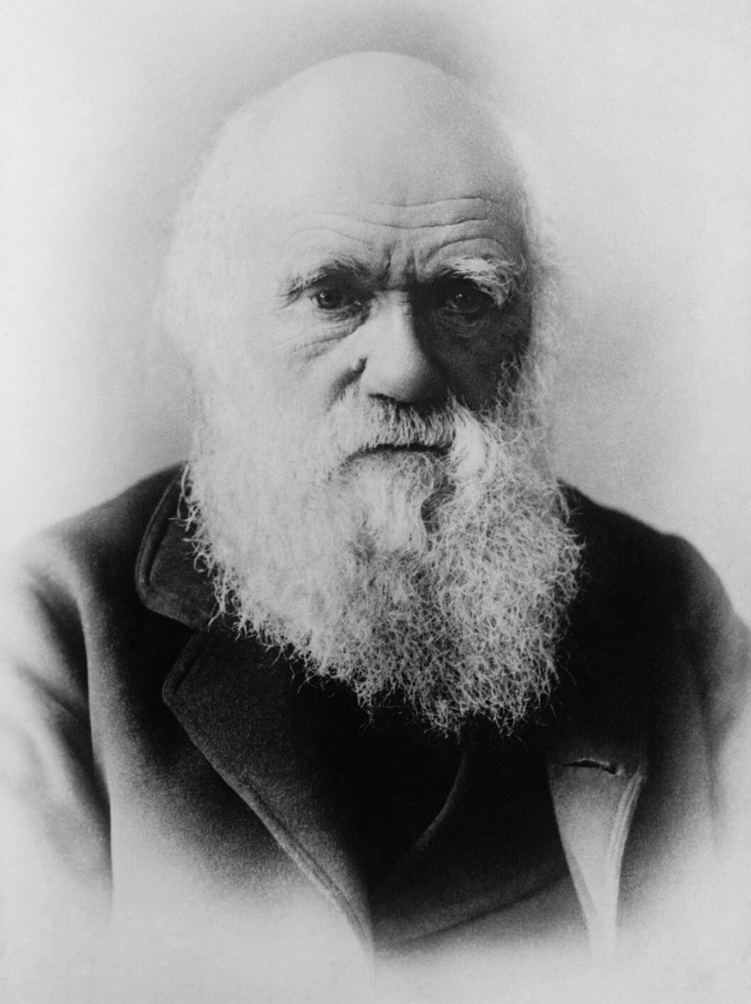 Charles Darwin Zitat Anpassung Wandel